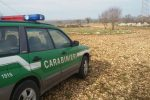 Soriano, tagliano alberi senza autorizzazione: 3 denunce