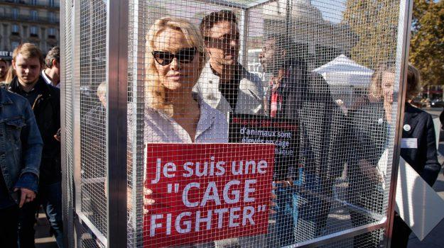 allevamenti in gabbia, End the cage age, petizioni animali gabbia, Eleonora Evi, Giulia Grillo, Ilaria Fontana, Loredana De Petris, Sicilia, Politica