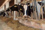 """Il Coronavirus mette in crisi gli allevatori siciliani: """"Senza aiuti si rischia l'ecatombe"""""""