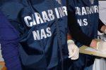 """Carenze igieniche"" in una mensa scolastica a Catanzaro, sanzione da 3 mila euro a una ditta"