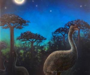 I grandi uccelli della preistoria erano notturni (fonte: John Maisano for the University of Texas at Austin Jackson School of Geosciences)