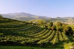 Vino: Svizzera al quarto posto per consumi pro capite