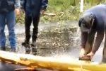 Maltempo, albero cade lungo la strada per Ficuzza: il video dei soccorsi