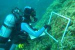 In Calabria nuove competenze per incrementare le attività di monitoraggio subacqueo