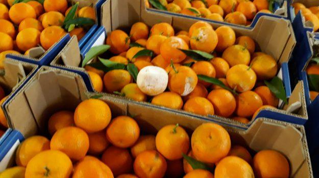 clementine, festival di sanremo, Sicilia, Sanremo