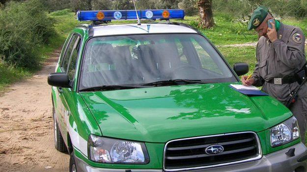 arresti parco delle serre, due arresti vibo, parco delle serre, pini tagliati parco delle serre, serra san bruno, tagliavano pini parco serre, Catanzaro, Calabria, Cronaca