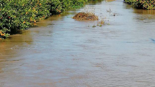 alluvione, esondazione Crati, ministalla, sfollati, thurio, Eugenio Facciolla, Cosenza, Calabria, Cronaca