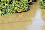 Agrumeti in un lago di fango, le desolanti immagini da Cosenza