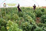 Coltivavano marijuana a Pizzo, scattano due misure cautelari