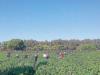 Gioia Tauro, disastro-tendopoli: cumuli di rifiuti, sanità al collasso e lavoro nero