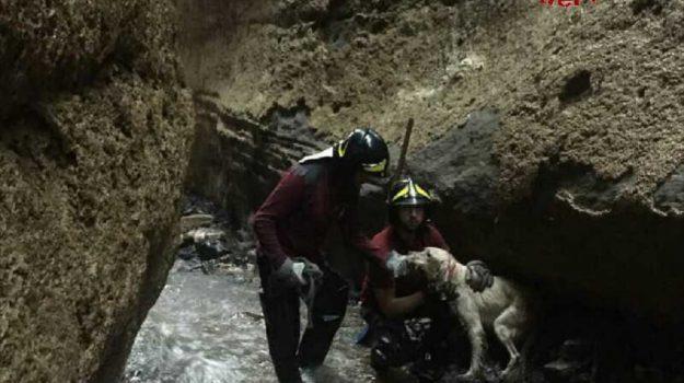 filadelfia cane disperso, Catanzaro, Calabria, Cronaca