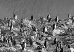 Tom Yorkhe ha inciso una canzone di sostegno al progetto di Greenpeace di creare un'enorme area protetta marina