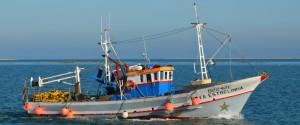 I pescatori di Crotone e il nodo delle royalties, decisivo il parere del ministero