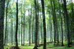 """Contratto integrativo dei forestali in Calabria, i sindacati: """"Basta rinvii"""""""