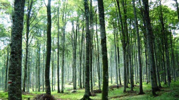 contratto, forestali, lavoro, Calabria, Economia