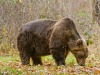 3 bears die in water collection tank in Abruzzo