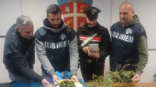 droga fattoria corigliano, Cosenza, Calabria, Cronaca