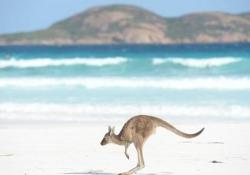 L'animale è stato portato in salvo da due agenti di polizia su una spiaggia in Australia