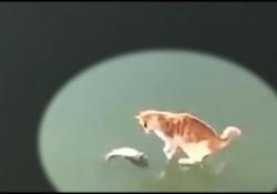 Le insidie dell'inverno: da uno stagno ghiacciato affiora un pesce, congelato