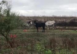Gli animali abbandonati stanno morendo di fame