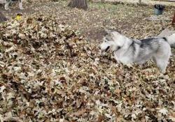 Quando arriva l'autunno gli amici a quattro zampe adorano tuffarsi e rotolarsi nelle foglie secche