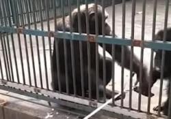 Il simpatico video catturato in uno zoo in Cina