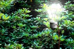 Il primo albero con foglie naturali e artificiali capaci di generare elettricità (fonte: IIT)