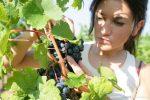 Agroalimentare, dal Psr Calabria oltre 10 milioni per le produzioni di qualità
