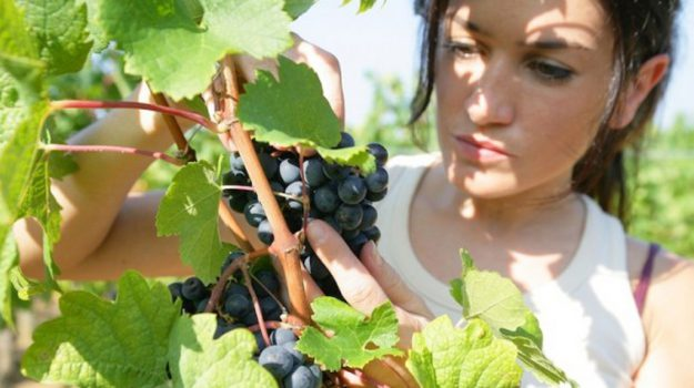 agroalimentare, calabria, psr, Calabria, Economia