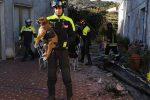 Terremoto sull'Etna, salvati tre cuccioli di cane