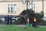 Maltempo, forti raffiche di vento a Reggio Calabria: crolla un albero sul lungomare