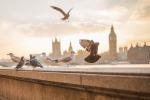 I piccioni sono tra le specie animali più comuni nelle città  (fonte: Pixabay)
