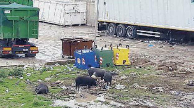 centro di raccolta, discarica, masseria, milazzo, rifiuti, sequestro, Messina, Sicilia, Cronaca