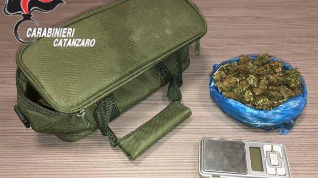 amaroni, droga, marijuana, vibo valentina, Catanzaro, Calabria, Cronaca