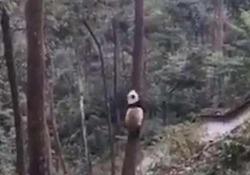 Il simpatico video girato in uno zoo cinese