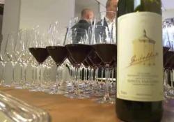 Il mito del Sassicaia, una serata a Milano per celebrarlo con il progetto «Il Meglio in Cantina»