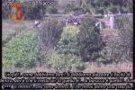 """Operazione """"Tisifone"""" a Crotone, si è costituito Devona: Nicoscia è ancora ricercato"""