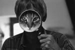 """'Cat face"""" (©David McEnery)"""