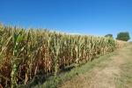 Nel Trapanese nasce il bio-distretto Terre degli Elimi