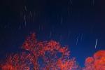 Pioggia di stelle cadenti (fonte: Emiliano Ricci, Flickr)