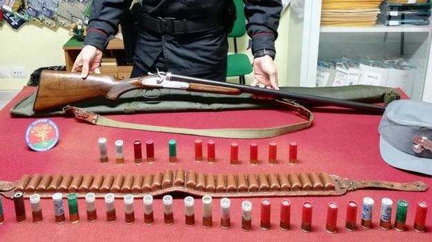 caccia al cinghiale, caccia cinghiale calabria, munizioni vietate, Cosenza, Calabria, Cronaca