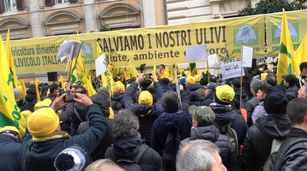 calabria, piano salva olio, protesta ministero, Franco Aceto, Calabria, Archivio