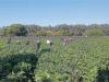 Giovani agricoltori, Ismea mette all'asta 10mila ettari di terra: lotti anche in Sicilia