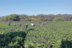 Programma di sviluppo rurale in Calabria, erogati oltre 14 milioni agli agricoltori