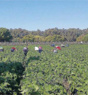 Locri, pronti i bandi a favore delle imprese agricole locali
