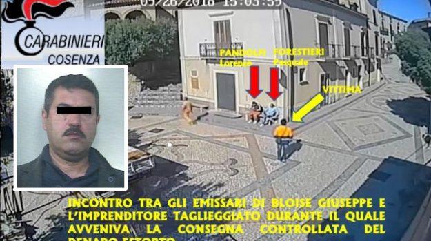 arresto boss santa domenica talao, Giuseppe Bloise, Cosenza, Calabria, Cronaca