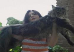 Vive nel Pavese il gatto più lungo del mondo: misura 1 metro e 20