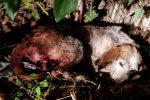 Cane colpito con un'ascia a Pizzo, inutili i soccorsi dei volontari per salvarlo