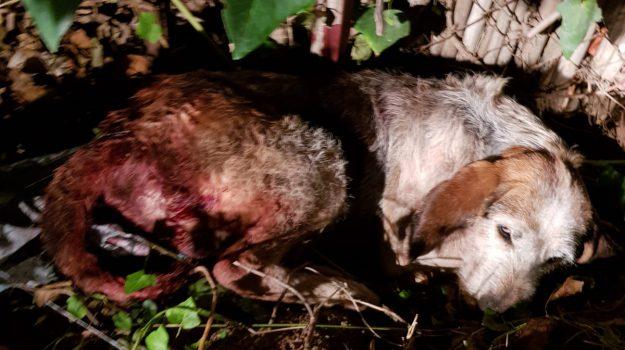 maltrattamenti animali, Catanzaro, Calabria, Cronaca