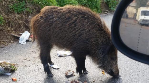 animali, provincia di cosenza, scalea, Cosenza, Calabria, Cronaca